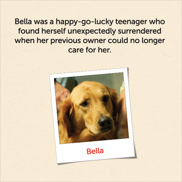 Bella was a happy-go-lucky teenager who found herself unexpectedly surrendered when her previous owner could no longer care for her