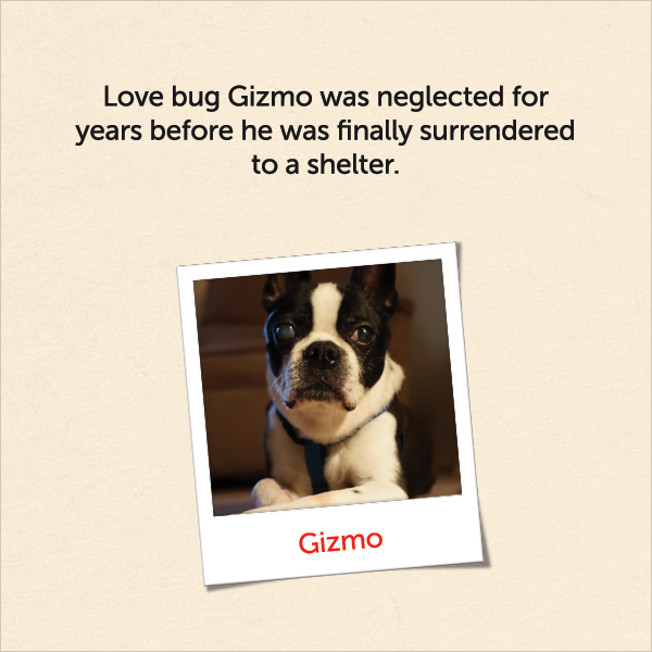 Love bug Gizmo was neglected for years before he was finally surrendered to a shelter