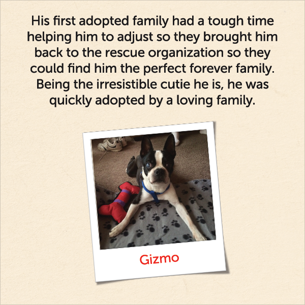 His first adopted family had a tough time helping him to adjust so they brought him back to the rescue organization so they could find him the perfect forever family. Being the irresistible cutie he is, he was quickly adopted by a loving family