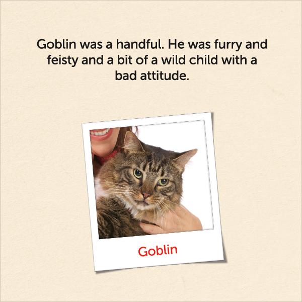 Goblin was a handful. He was furry and feisty and a bit of a wild child with a bad attitude