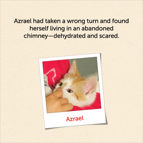 Azrael had taken a wrong turn and found herself living in an abandoned chimney, dehydrated and scared