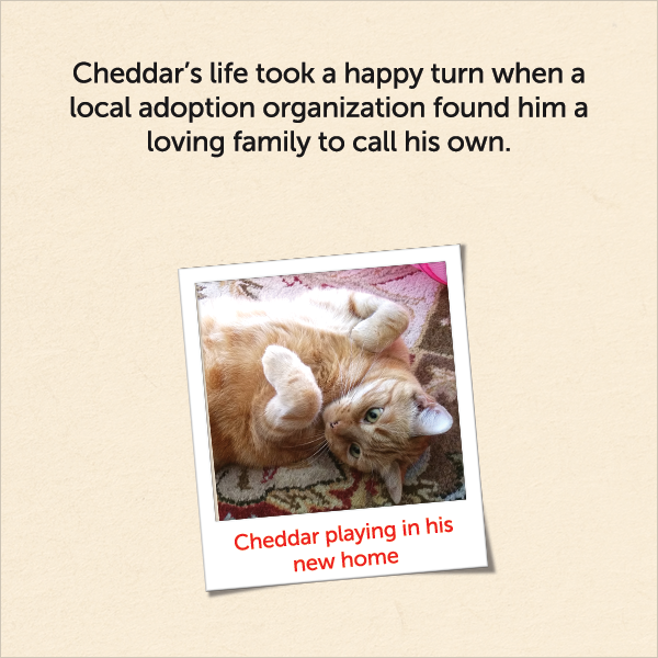 Cheddar's life took a happy turn when a local adoption organization found him a loving family to call his own
