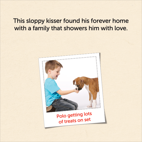 This sloppy kisser found his forever home with a family that showers him with love