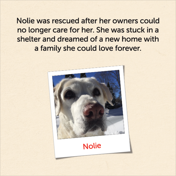 Nolie was rescued after her owners could no longer care for her. She was stuck in a shelter and dreamed of a new home with a family she could love forever.