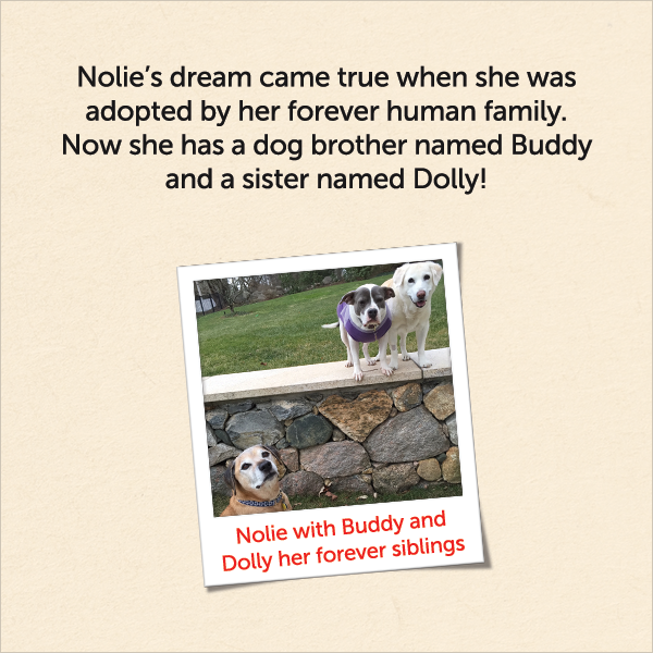 Nolie's dream came true when she was adopted by her forever human family. Now she has a dog brother named Buddy and a sister named Dolly!