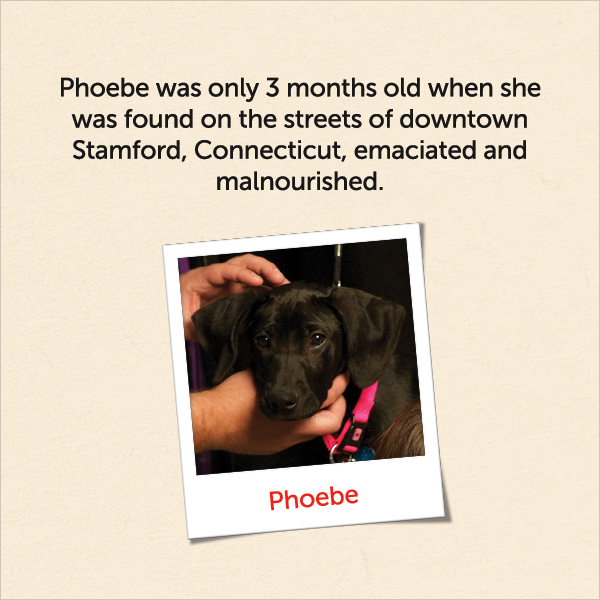 Phoebe was only 3 months old when she was found on the streets of downtown Stamford, Connecticut, emaciated and malnourished