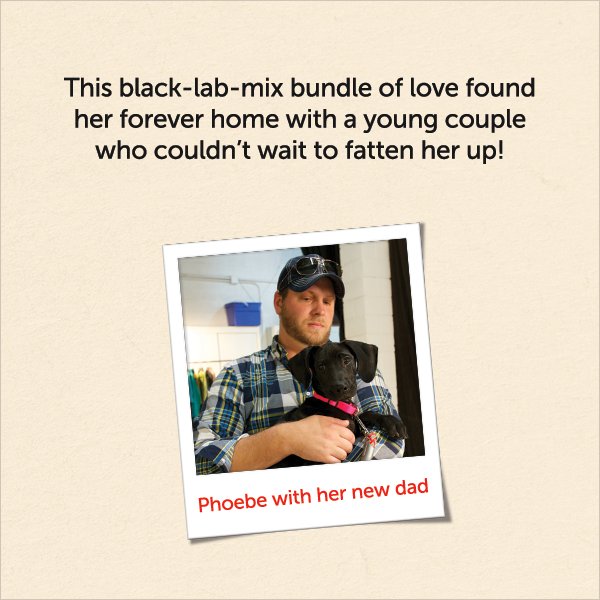 This black-lab-mix bundle of love found her forever home with a young couple who couldn't wait to fatten her up!