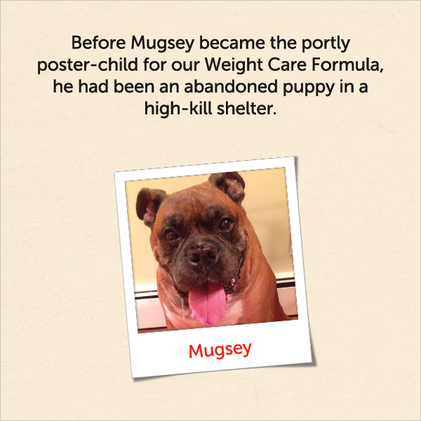 Before Mugsey became the portly poster-child for our Weight Care Formula, he had been an abandoned puppy in a high-kill shelter