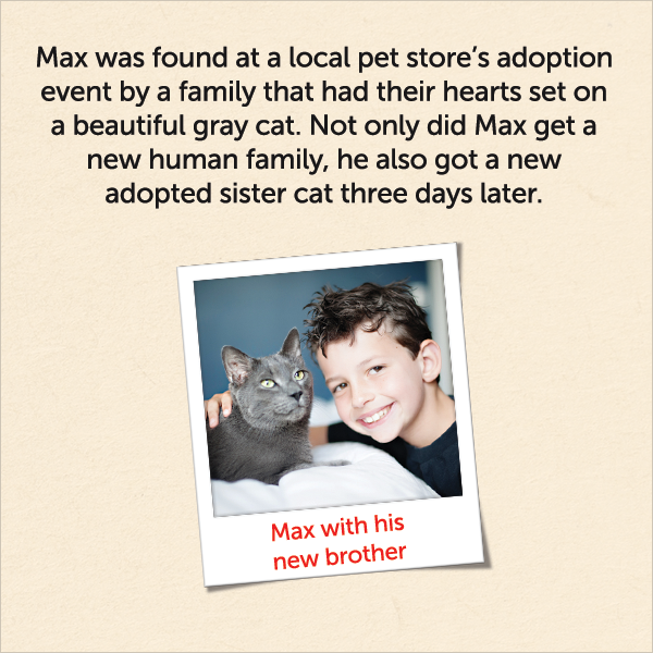 Mat was found at a local pet store's adoption event by a family that had their hearts set on a beautiful gray cat. Not only did Max get a new human family, he also got a new adopted sister cat three days later