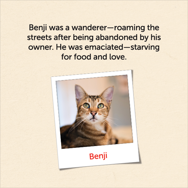 Benji was a wanderer roaming the streets after being abandoned by his owner. He was emaciated, starving for food and love