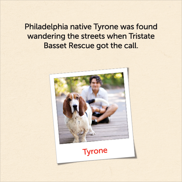 Philadelphia native Tyrone was found wandering the streets when Tristate Basset Rescue got the call