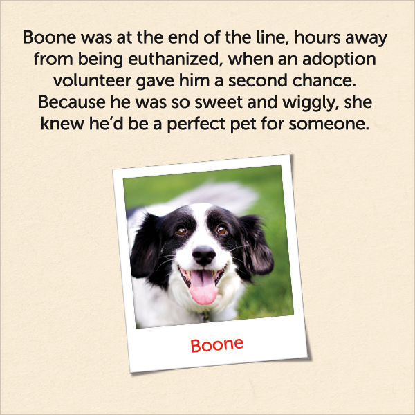 Boone was at the end of the line, hours away from being euthanized, when an adoption volunteer gave him a second chance. Because he was so sweet and wiggly, she knew he'd be a perfect pet for someone