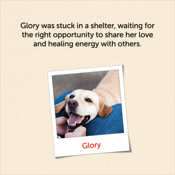 Glory was stuck in a shelter, waiting for the right opportunity to share her love and healing energy with others