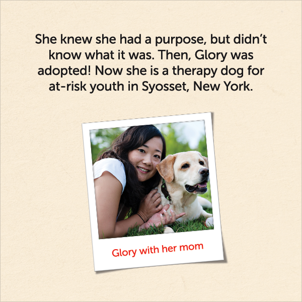 She knew she had a purpose, but didn't know what it was. Then, Glory was adopted! Now she is a therapy dog for at-risk youth in Syosset, New York