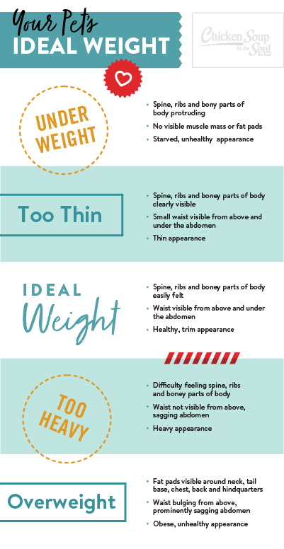 Infographic on ideal pet weight