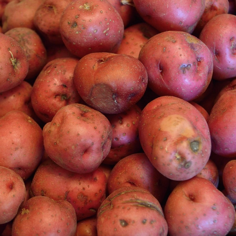 Red skinned potatoes image