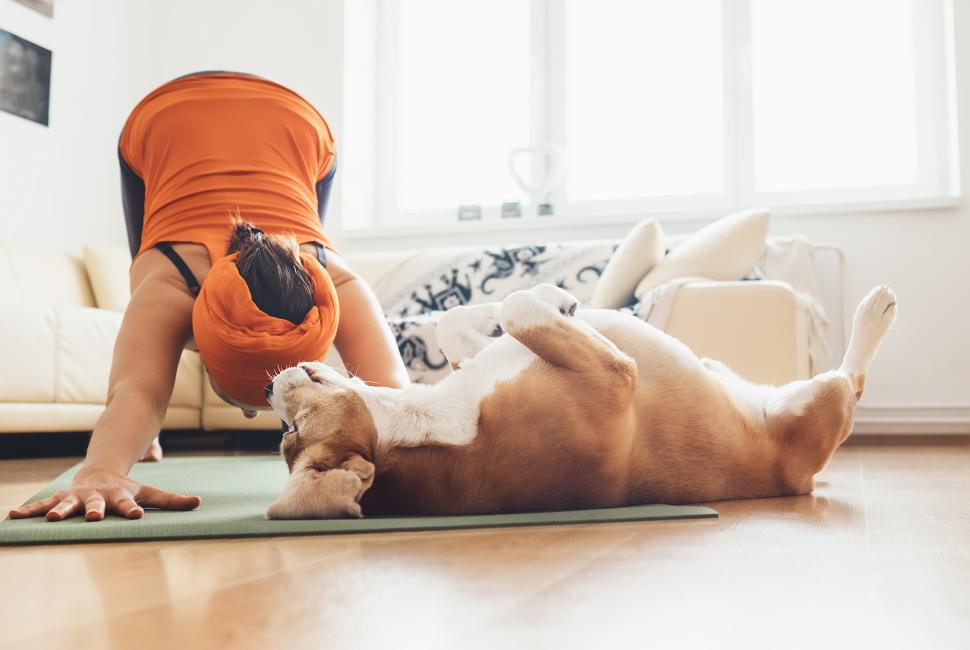 Getting Fit With Your Best  Furry  Friend
